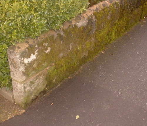 close up garden wall.JPG (82062 bytes)
