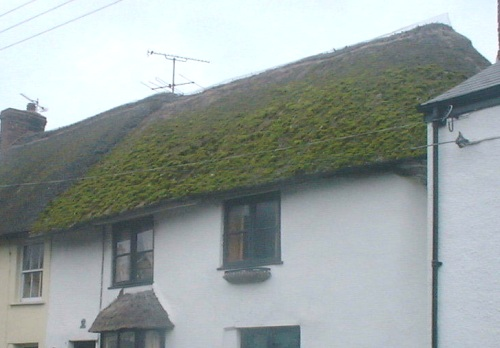 old thatched roof.JPG (50188 bytes)