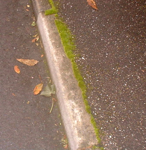 outside home pavement.JPG (119726 bytes)