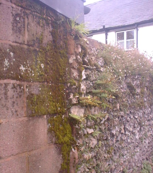 shed wall church st.JPG (127235 bytes)